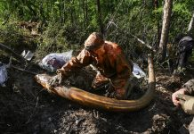 The hunt for Siberia's white gold