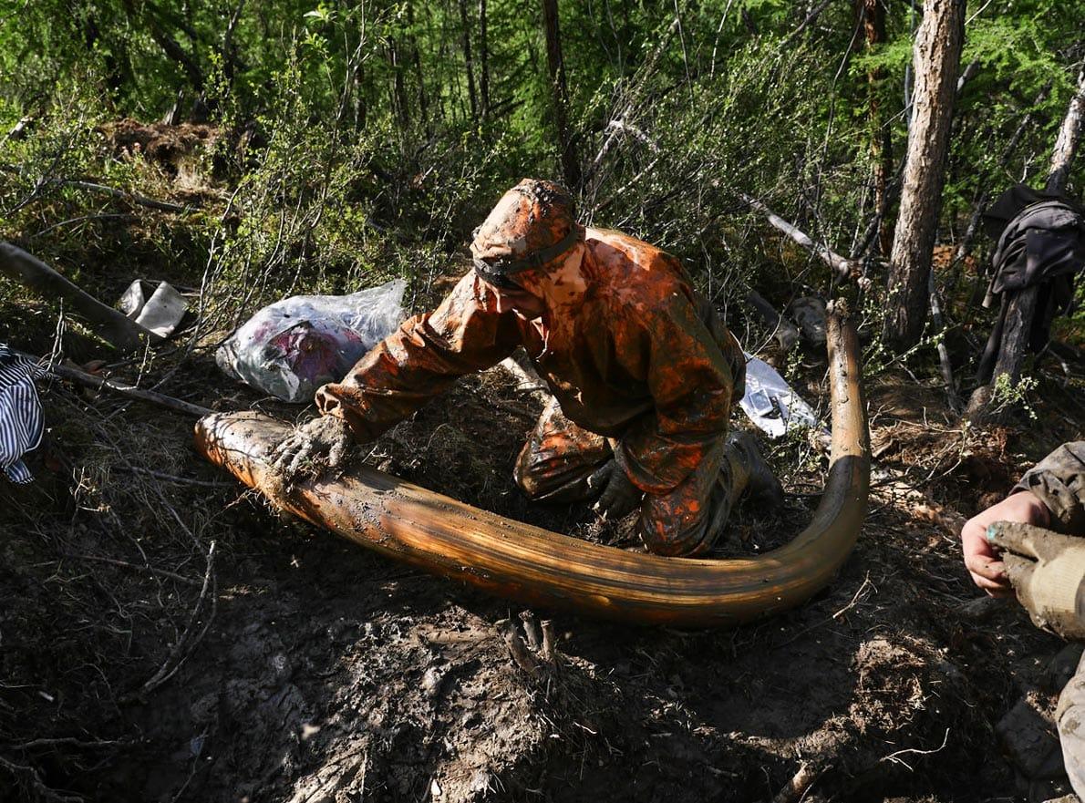 The hunt for Siberia's white gold