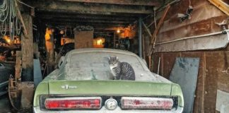 1967 Shelby GT500 Barn Find In The Middle Of Iowa