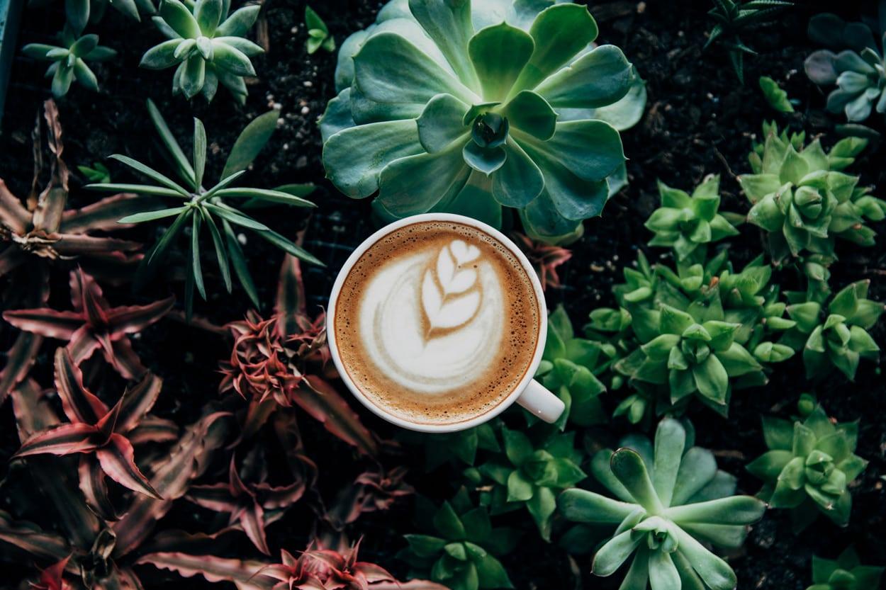 Top Ethiopian Coffee Blends
